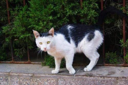 有什么办法接近受伤的猫咪?